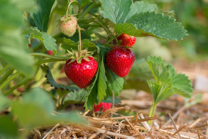 Regional-saisonales Obst und Gemüse im Juni