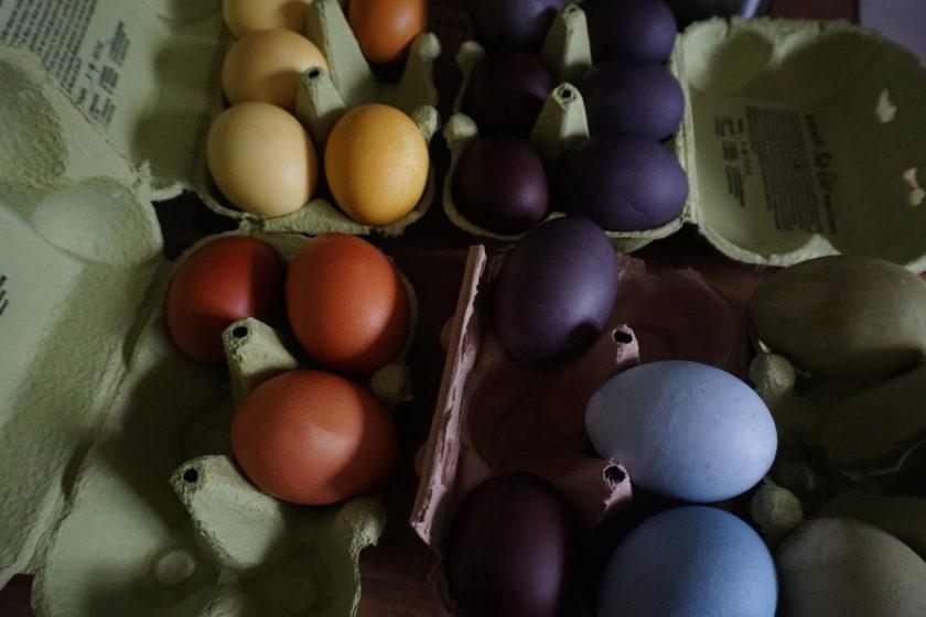 Natürlich gefärbte Ostereier in Eierpappe trocknen lassen